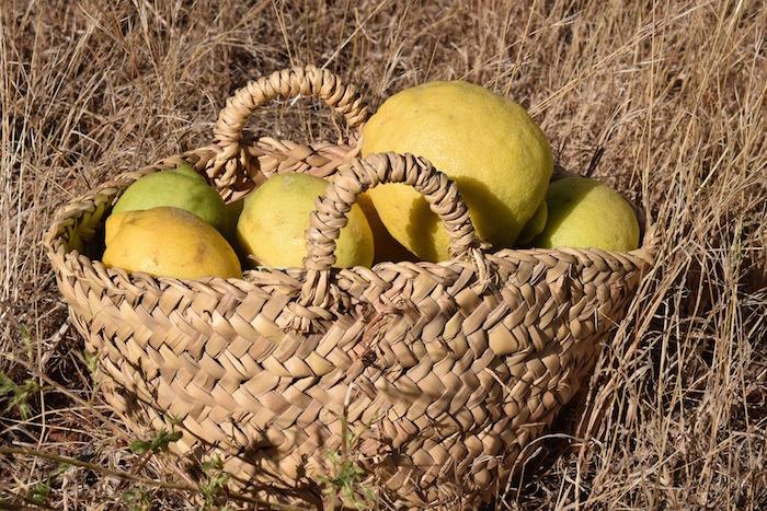 Lemon hacks on mykitchen.co.za