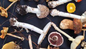 Delheim 2016 Mushroom Hunts HR (3)