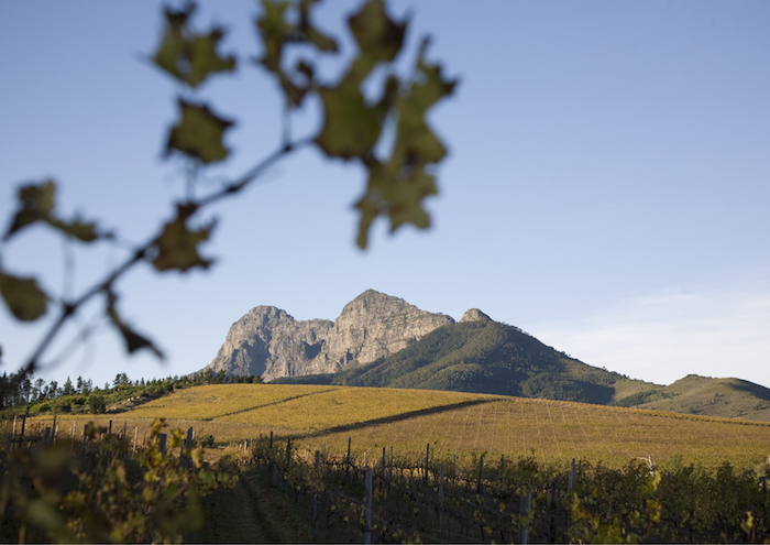 The Stellenbosch Wine Route snags award at the International Wine Tourism Challenge 2017