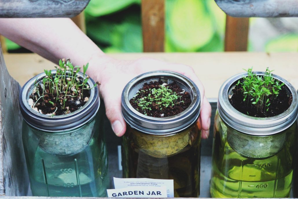Fill your garden with these herbs
